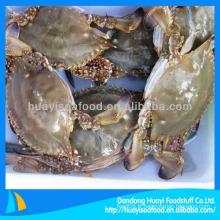 Fruits de mer congelés gros bleu crabe de natation