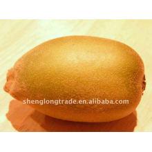 Fresh Actinidia sinensis kiwi