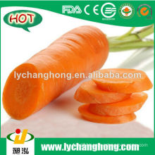 2014 Chinese Fresh carrot for hot sale