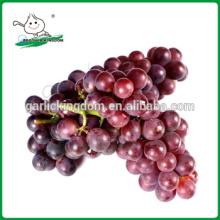 Vender uvas vermelhas / uvas / uvas frescas da China