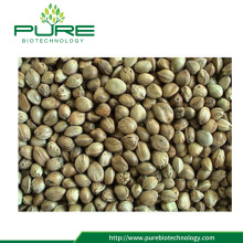 Bulk Industrial Hemp Seeds