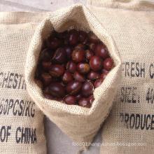 10kg/Gunny Bag Top Quality Chestnut
