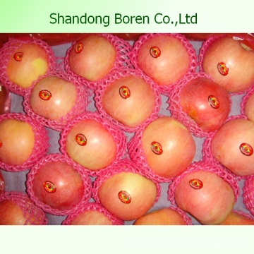 Supply Fresh Chinese FUJI Apple