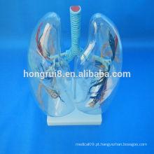 VENDAS QUENTES Modelo de segmento de pulmão transparente pulmão anatômico humano transparente