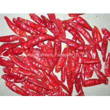 Nouveau piment rouge séché