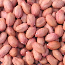 New Crop High Quality Export Blanched Peanut Kernels