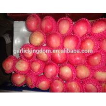 Frische Apfelfrucht / chinesischer frischer Apfel / Großhandelspreis Apfelfrucht
