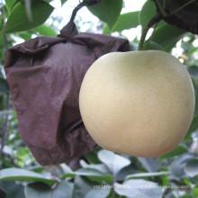 Top Quality Fresh Golden Pear/Crown Pear