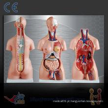 Torso humano unisex 85CM (23parts), modelo de ensino