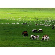 CAS No 11015-37-5 Veterinary Drugs Flavophospholipol 8%
