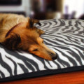 Comfortable Pet Bed Large