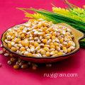Оптовая торговля продуктами сельского хозяйства Зерна кукурузы Цельнозерновые