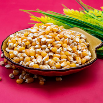 Sementes de milho frescas com boa relação custo-benefício Grãos inteiros