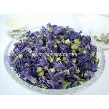 Bulk Violet und frische Blumen Ringelblume