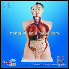 Advanced High Quality Medical Torso model modelo educacional de 85cm 19 partes Torso Model