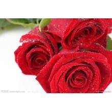 Venta caliente 100% Natural Rose PE