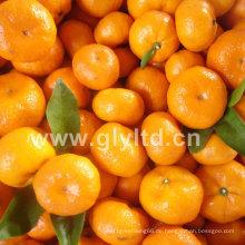 Frischer Chinese in guter Qualität Baby-Mandarine