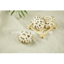 Champignons magiques de fleur blanche