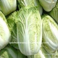 2011 fresh chinese cabbage