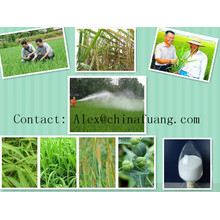 Agricultural Chemicals Agrochemical Systemic Fungicide 50% Wp Watable Powder Carbendazim