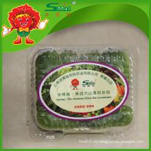 Hortalizas frescas orgánico pepino