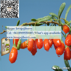 Low Pesticide Goji Berry / Ningxia wolfberry con buen gusto