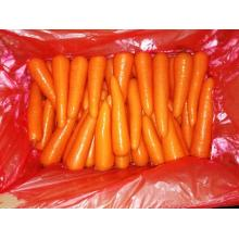 Chinese  fresh carrot 316 other style