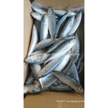 Nueva Aterrizaje 100-200g Caballo Pescado de caballa