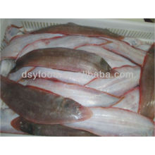 FROZEN TONGUE SOLE WHOLE ROUND HOOK CAUGHT FISH