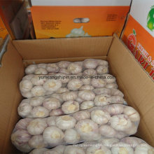 High Quality Fresh Style Pure White Garlic From China