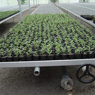 Seed rolling bench rolling bed for agriculture greenhouse
