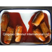 Conservas de caballa en salsa de tomate (HACCP, ISO, BRC, FDA, etc.)