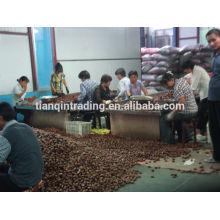 Chinese chestnut exporter