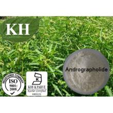 Natural Kariyt Extract / Andrographis Paniculata Extract Andrographolide 10%- 98%