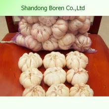 Versorgungsmaterial-heißer Verkaufs-frischer weißer Knoblauch