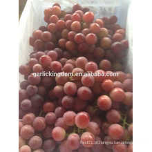 Vender uvas vermelhas