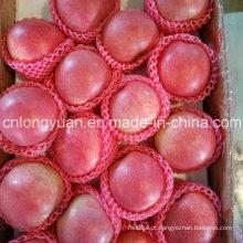 China Origem Fresh Qinguan Apple