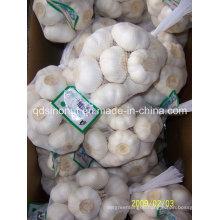New Crop Pure White Garlic 500g