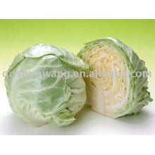 fresh cabbage in food and beverage