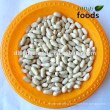 Precio de cacahuetes blanqueados tamaño grande de shandong de la nueva cosecha 2014