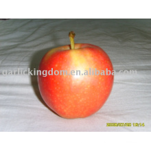Venda 2013 gala apple
