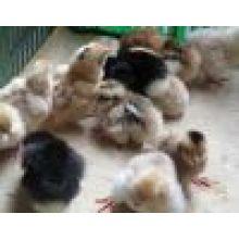 Monensin Animal Food Additive Monensin