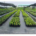 Tissu agricole de tapis de mauvaise herbe / paysage, tapis de mauvaise herbe de pp, couverture de sol de pp