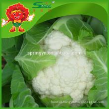 round white cauliflower friendly fresh vegatables