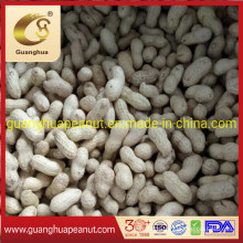 Best Quality Peanut in Shell New Crop Groundnut in Shell