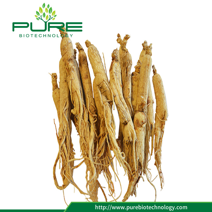 Dried Angelica Sinensis Root For Wholesales (3)