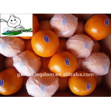 Big navel orange/Fresh orange/Navel orange