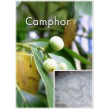 (Camphor) --- High Quality Camphor CAS: 76-22-2 Camphor
