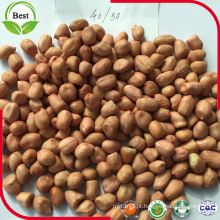 Kernel de Amendoim com Pele Vermelha 40/50 50/60