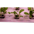 Indoor Hydroponic Lighting Wachsende Gartensysteme